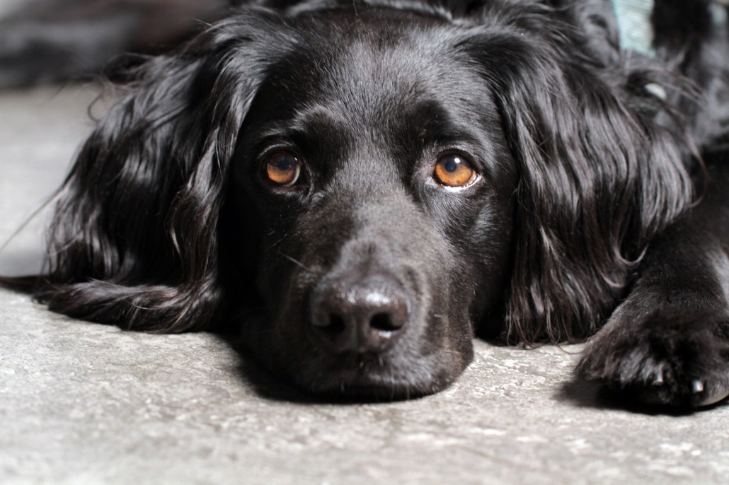 When you pass, what happens to your pet?
